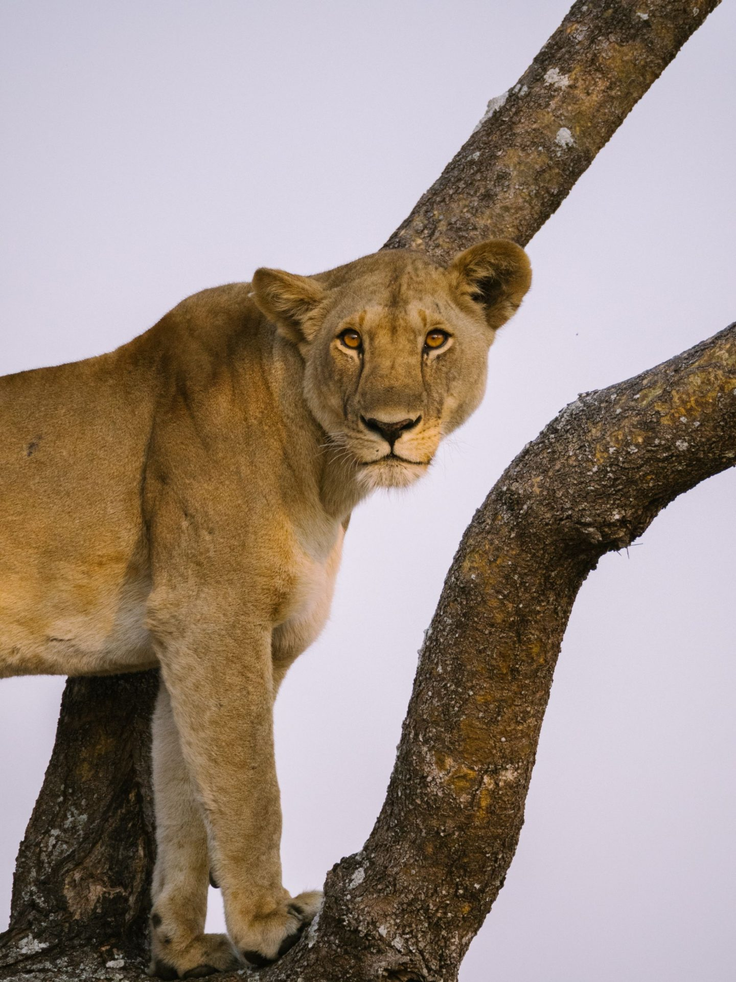 30 Photos To Inspire You To Visit Katavi National Park