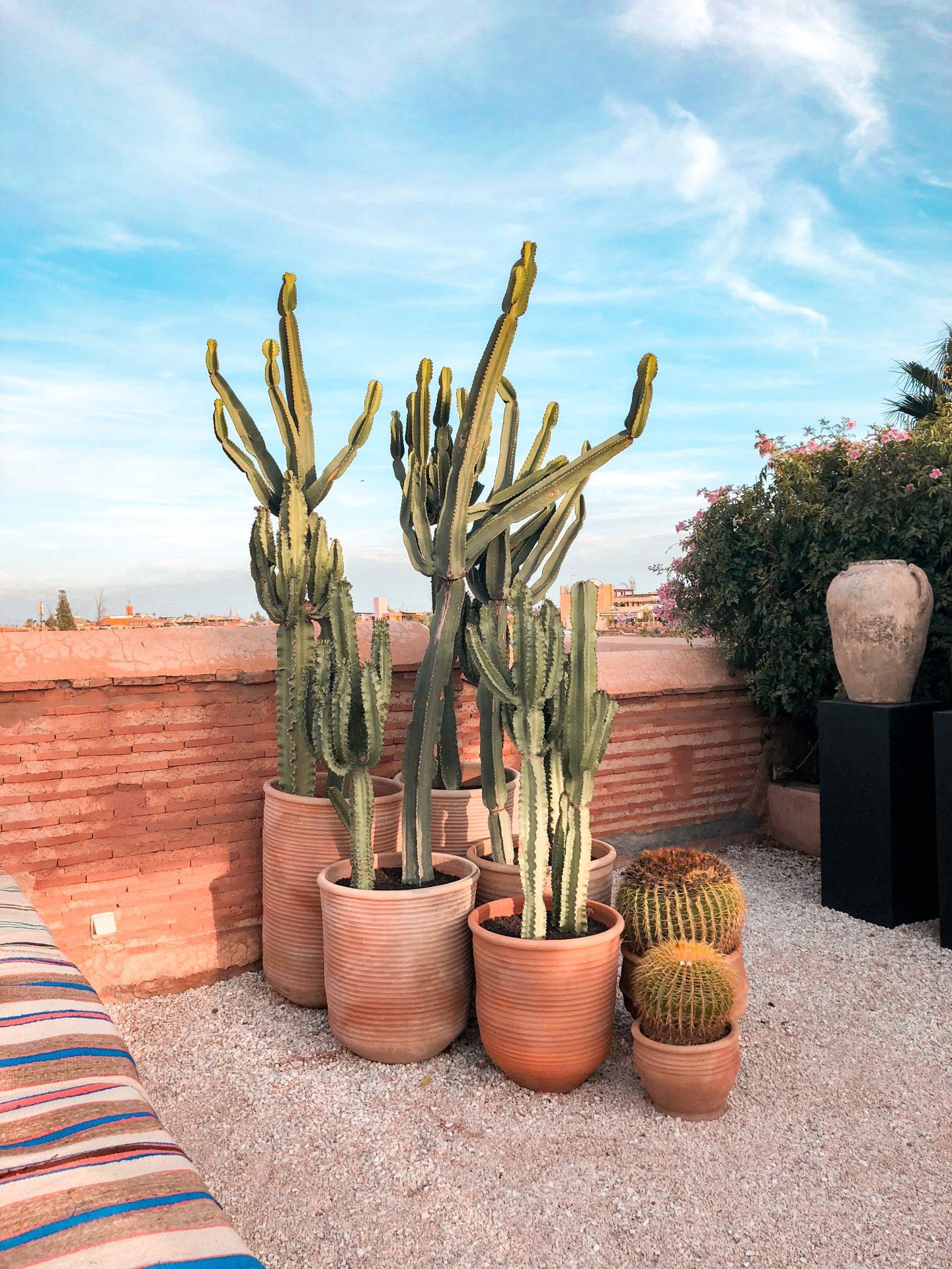 Best rooftops in Marrakech