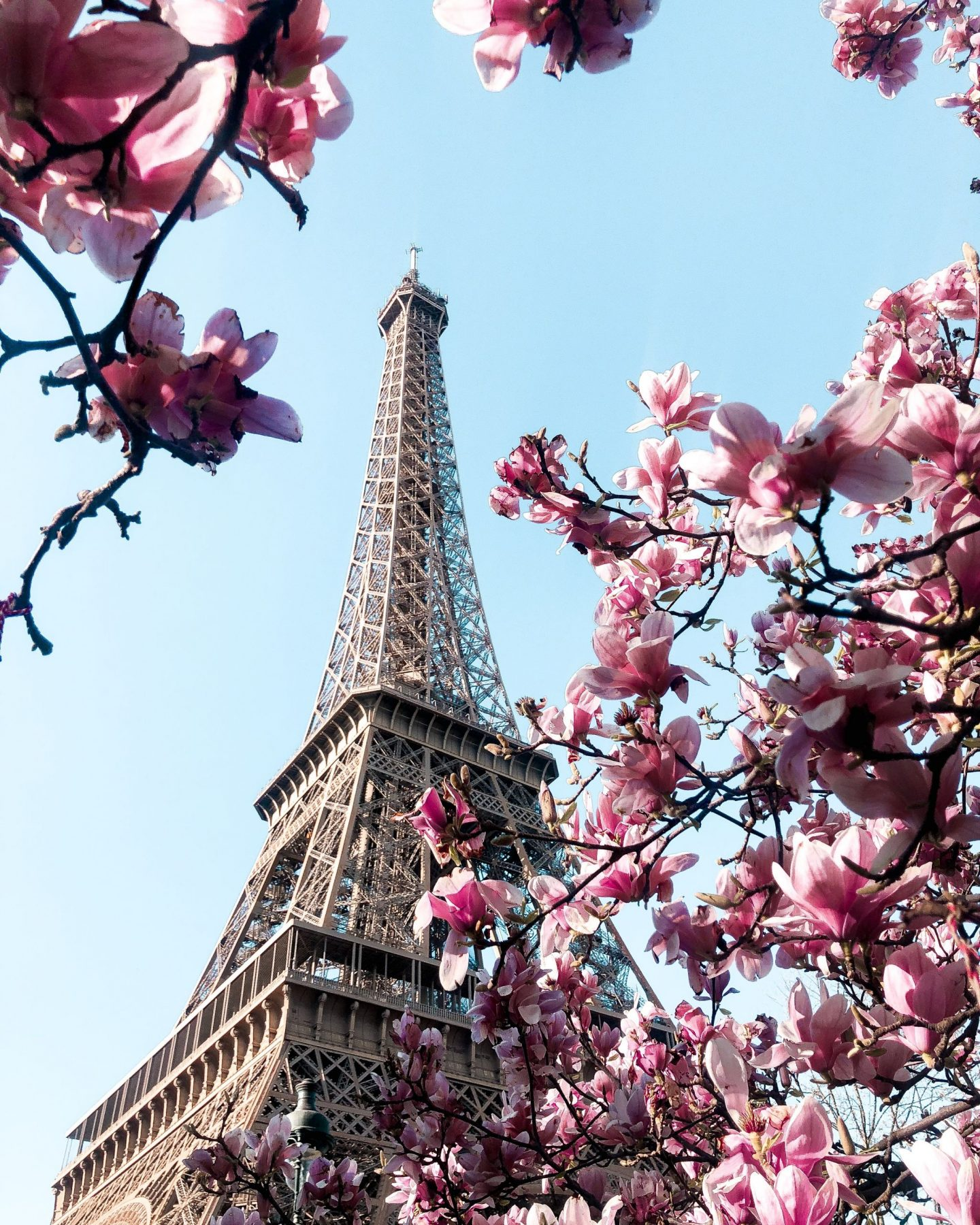 Cherry blossom in Paris