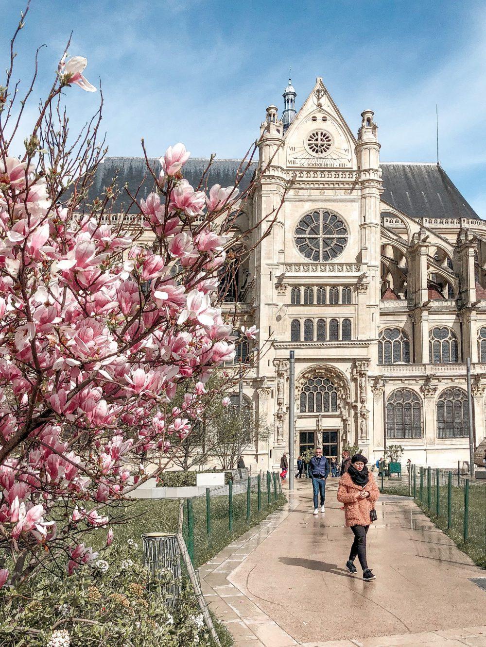 Cherry blossom Paris Les Halles