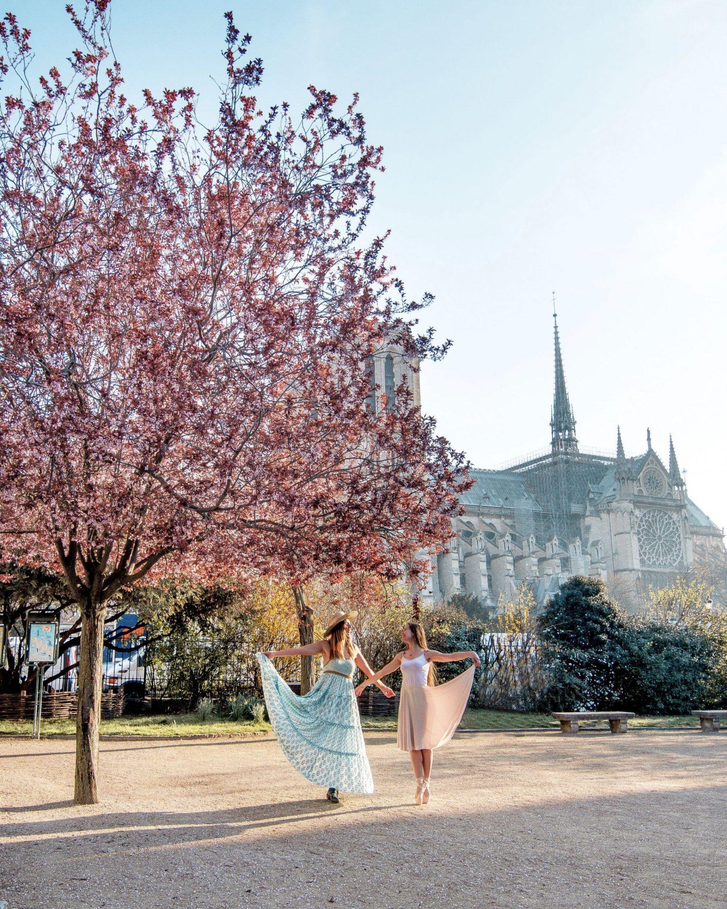 Cherry blossom Paris Notre Dame