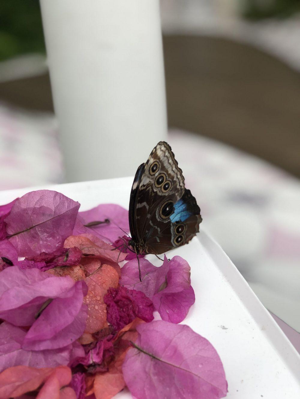 Butterfly Sharjah
