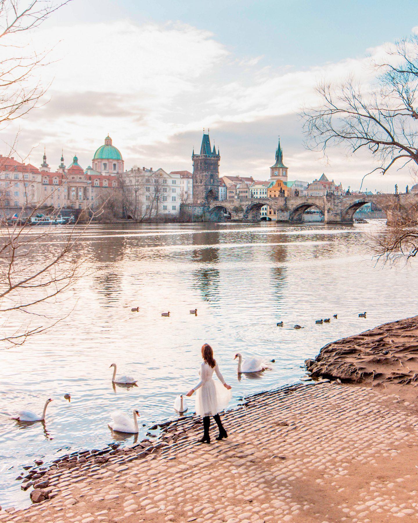 swans prague